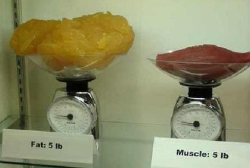 같은 무게 지방과 근육의 비교 사진 '화제'