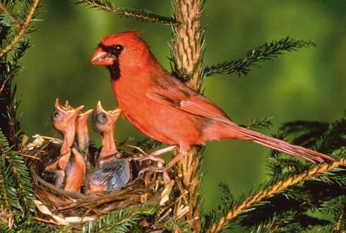 굶주린 아기새, 커서도 먹이 집착