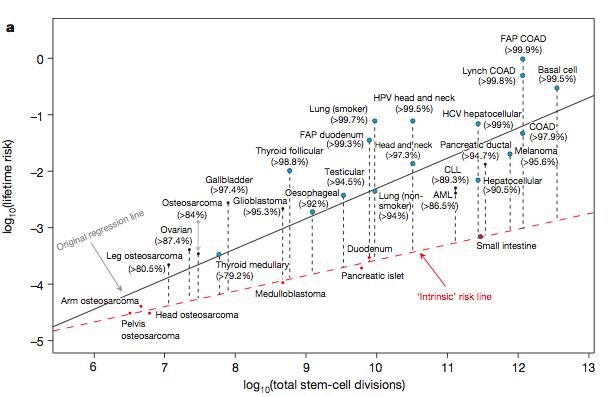 지난해 초 발표돼 화제가 된 암 발생의 '불운 가설'은 데이터를 잘못 해서한 결과라고 주장하는 논문이 '네이처' 1월 7일자에 실렸다. 즉 암 발생률(세로축)과 줄기세포 분열횟수(가로축)의 관계를 나타내는 그래프에 분포돼 있는 여러 암 가운데 아래쪽에 있는 것들만(빨간점선)을 임의로 일어난 경우로 가정할 경우 많은 암에서 외부요인이 차지하는 비율이 90%를 넘는다.  - 네이처 제공