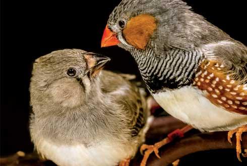 [표지로 읽는 과학-사이언스] 새가 노래 배우는 비밀은