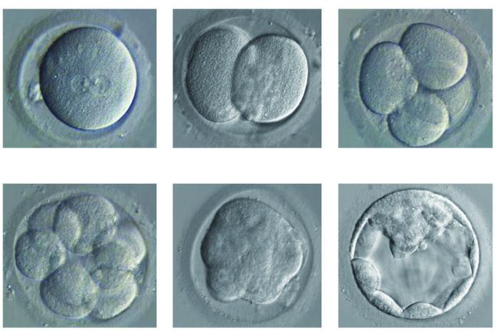 [유전자 편집 아기 논란]다시 불붙은 인간 배아 연구 논쟁