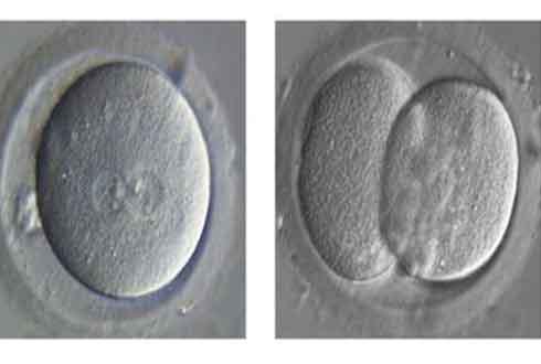 인간 배아 유전자 편집 현실로?