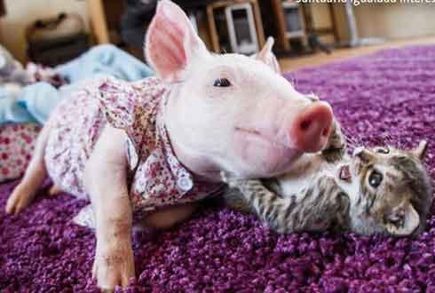 친구가 된 새끼 돼지와 고양이, 귀여워