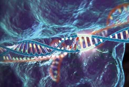[어떻게 생각하십니까] 英 정부, 크리스퍼 유전자 가위 인간 배아 적용 허용