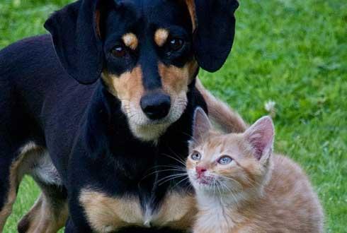 [반려동물 1000만 시대, 개와 고양이의 과학 ②] 먹이에 대한 본능은 정반대
