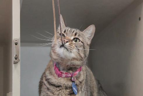 장난감 앞에서 무너지는 고양이, 예민해~예민해~