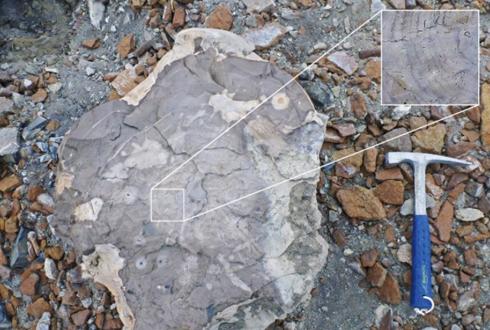 남극에서 귀한 돌이 운석뿐이랴, 또 다른 돌 화석을 찾아라