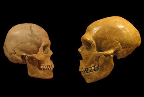 네안데르탈인과 현생 인류의 이종교배, 언제부터 이뤄졌나
