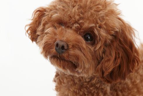 (영상)개를 키우며 몰랐던 5가지 비밀