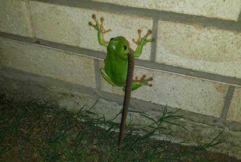 청개구리가 뱀 잡아먹어, '장면 포착'