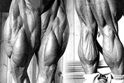 굵고 섬세한 '상상 초월 다리 근육'
