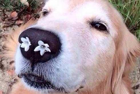 꽃냄새에 취한 개 '누리꾼 인기'