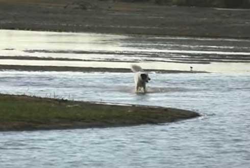 개를 악어가 사냥하는 장면 '포착'