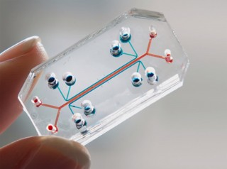 폐를 칩 위에 모사한 미국 하버드대 위스생물공학연구소의 '렁온어칩(Lung-on-a-chip)'. 당시 위스생물공학연구소의 연구원이었던 허동은 미국 펜실베니아대 교수가 연구를 이끌었다. - 허동은 미국 펜실베니아대 교수 제공
