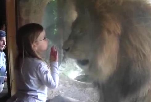 사자는 뽀뽀를 싫어해?!