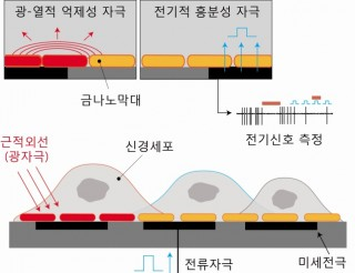금 나노막대와 미세 전극 칩을 결합한 광-전기 복합 자극 칩 모식도. - 한국과학기술원(KAIST) 제공