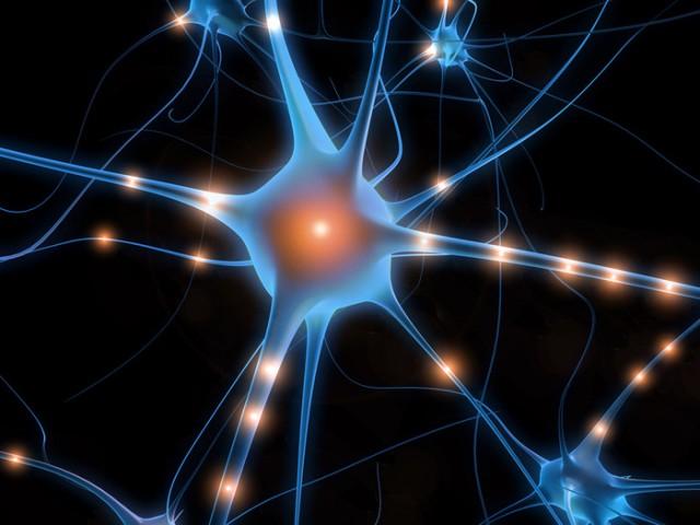 신경세포는 전기, 빛, 열 등의 자극에 의해 활성화 될 수 있다. - UC버클리 제공