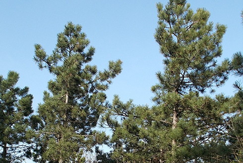 단단한 나무가 정수기로 변신!