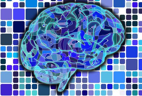 뇌 신경세포 실시간 관찰하는 바이오센서 '파도' 개발