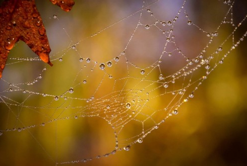 지름 2㎜ 물방울이 0.2㎜ 굵기 거미줄에 초속 1㎝로 부딪힌다면?