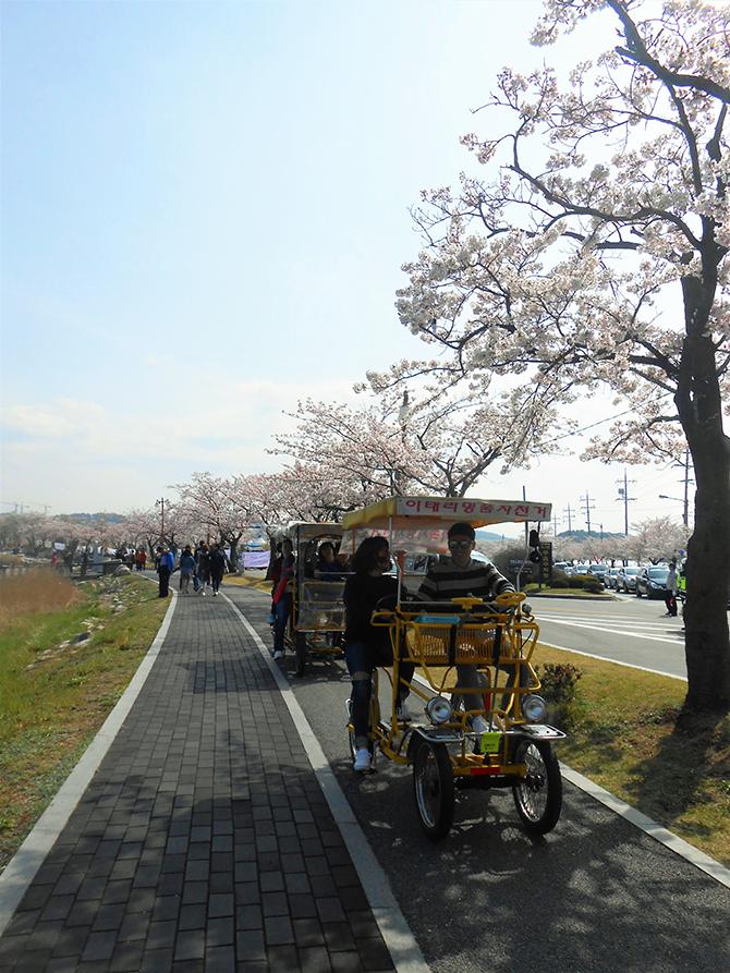 낭만 데이트 장소인 경포호. 두 손 꼭 잡고 걸어도 좋고, 자전거를 타고 함께 아름다운 풍경을 담기도 좋다. - 고기은 제공