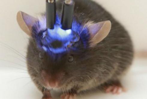 'RC카' 조종하듯 세포 소기관 조종하는 기술 개발