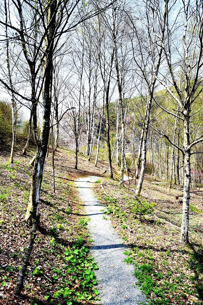 지금 이 시간이 소중하다는 걸 일깨워주는 자작나무숲길 - 고종환 제공