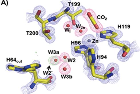 '세상에서 제일 빠른 단백질' 순간포착 첫 성공
