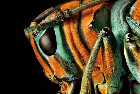 '초정밀 사진' 예술 작품 같은 곤충 모습