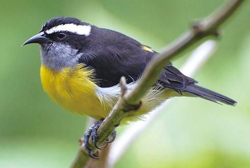 '작은 날개, 긴 다리' 섬 새 유행 예감