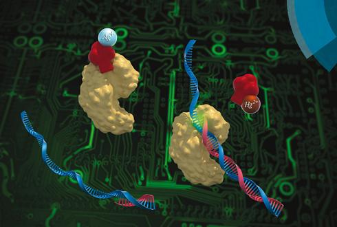 DNA '스위치' 찾았다…유전자 질환 치료 청신호