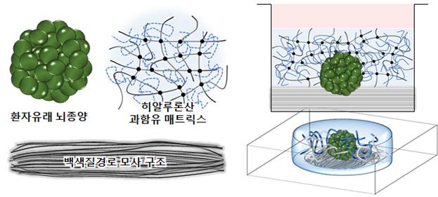 환자 대체치료용 3차원 체외 뇌종양(뇌암) 모델의 모식도 - KAIST 제공