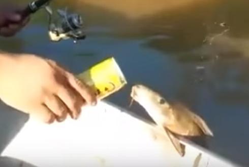 벌컥벌컥, 맥주 얻어먹는 물고기 '포착'