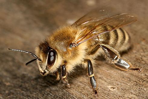 꿀벌이 벌집을 에어컨으로 만드는 비결은?