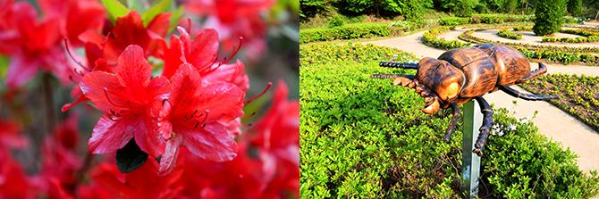 매년 봄에 철쭉 축제를 한다. 올해엔 4월 29~30일 열렸다.(왼쪽) 곤충 조형물, 그네 벤치 등이 아기자기하게 어우러진 유럽정원.(오른쪽) - 고종환 제공