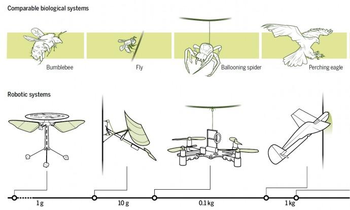 드론이 휴식을 위해 착륙하는 방식은 벌, 파리, 거미 독수리 등 동물의 착륙 동작을 모방한 경우가 많다. - 사이언스 제공