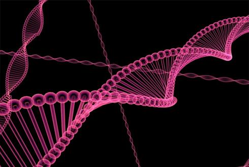 세포 주기 조절 요인, 단백질(X) mRNA(O)