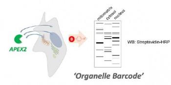 단백질의 위치 분석 결과로 만들어낸