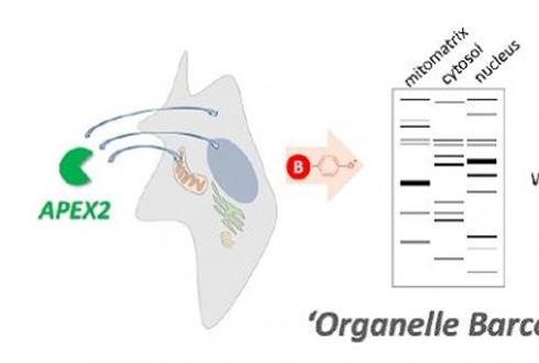 몸 속 단백질 정확한 위치 찾아낸다