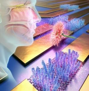 바이오전자코 기능을 시각적으로 나타낸 모습 - 한국생명공학연구원 제공