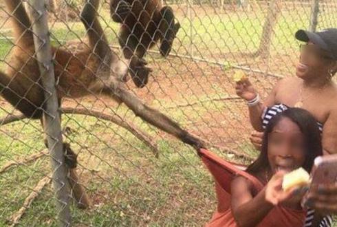 """""""먹을 거 내 놔!"""" 무서운 동물원 원숭이"""