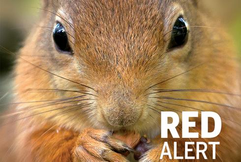 英, 붉은다람쥐를 지켜라