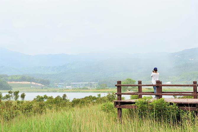 호수 주변의 포매리 지역 일대는 백로와 왜가리의 번식지다. 1970년 천연기념물 229호로 지정돼 있다. - 고종환 제공