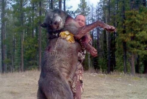 거대한 늑대, 진짜일까