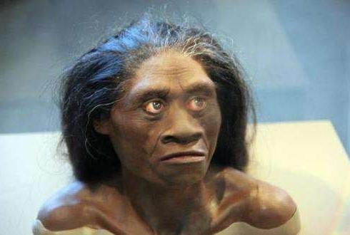 '호빗'의 조상, 70만 년 전에 존재했다.