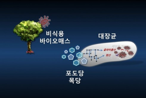 KAIST '미생물 공장', 올해의 떠오르는 10대 기술에 선정