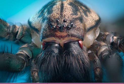 거대한 괴수처럼 보이는 거미와 무당벌레