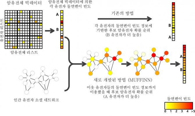 그림에서 암유전자 A와 B는 모두 암환자들에서 돌연변이가 나타나는 빈도가 매우 낮기 때문에 기존의 돌연변이의 빈도를 바탕으로 한 암유전체 빅데이터 분석 방법으로는 이들 암유전자들을 발굴할 수 없었다. 하지만 유전자 소셜 네트워크를 적용한 머핀은 이들 암유전자들의 이웃 유전자들의 돌연변이 빈도까지 분석하기 때문에 효과적으로 암 유발 확률이 높은 암 유전자를 가려낼 수 있다. - 연세대 제공 제공