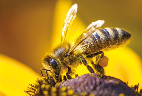 지구사랑탐사대 현장취재➊ 달콤살벌 꿀벌 체험