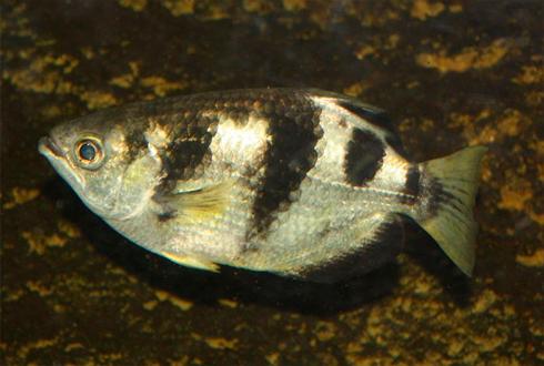물고기가 사람의 얼굴을 알아본다?